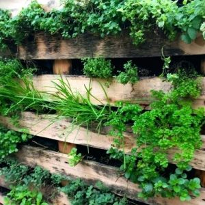 ferntree-gully-vertical-gardens