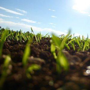 ferntree-gully-garden-supplies-lawn-products