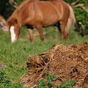 garden-supplies-manure-bags