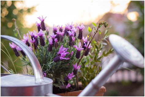 Watering Cans Are The Best Way To Water A Garden Pot
