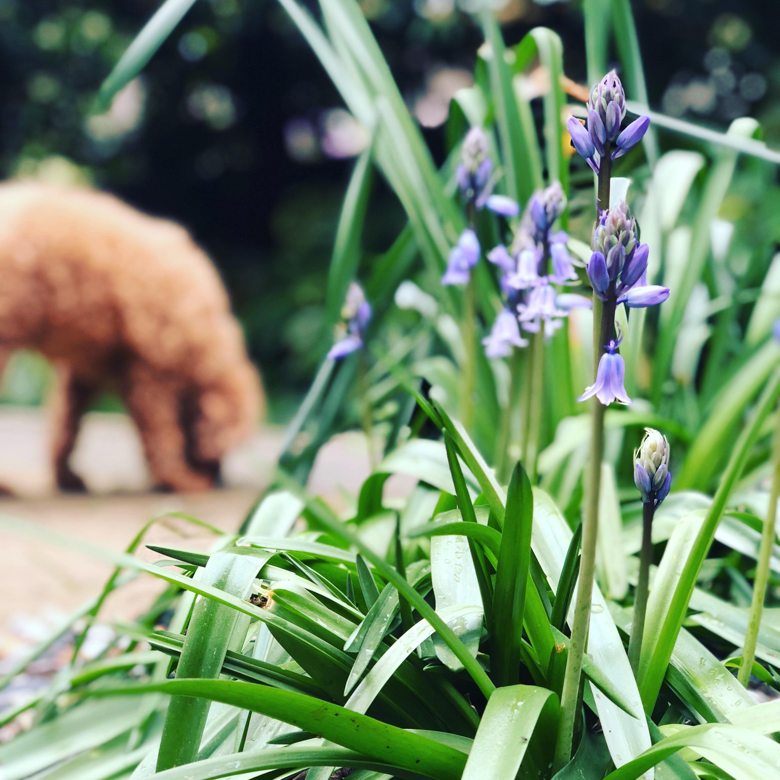 Manna Gum Building & Garden Supplies Ferntree Gully Outdoor Living Spaces