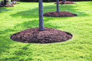 Don't Pile Mulch Around Tree Trunks