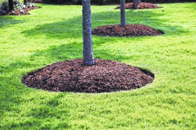 Don't Pile Mulch Around Tree Trunks